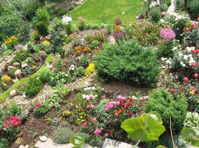 Альпийская горка растения схема фото 233