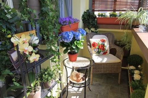 cvety na balkone