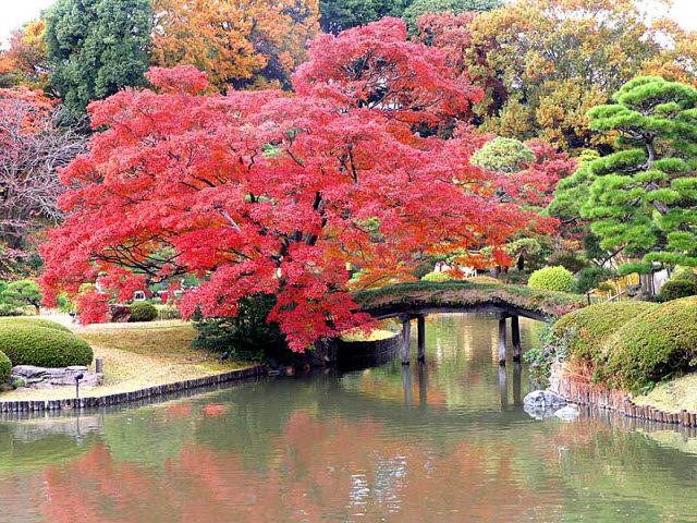 japanpics11